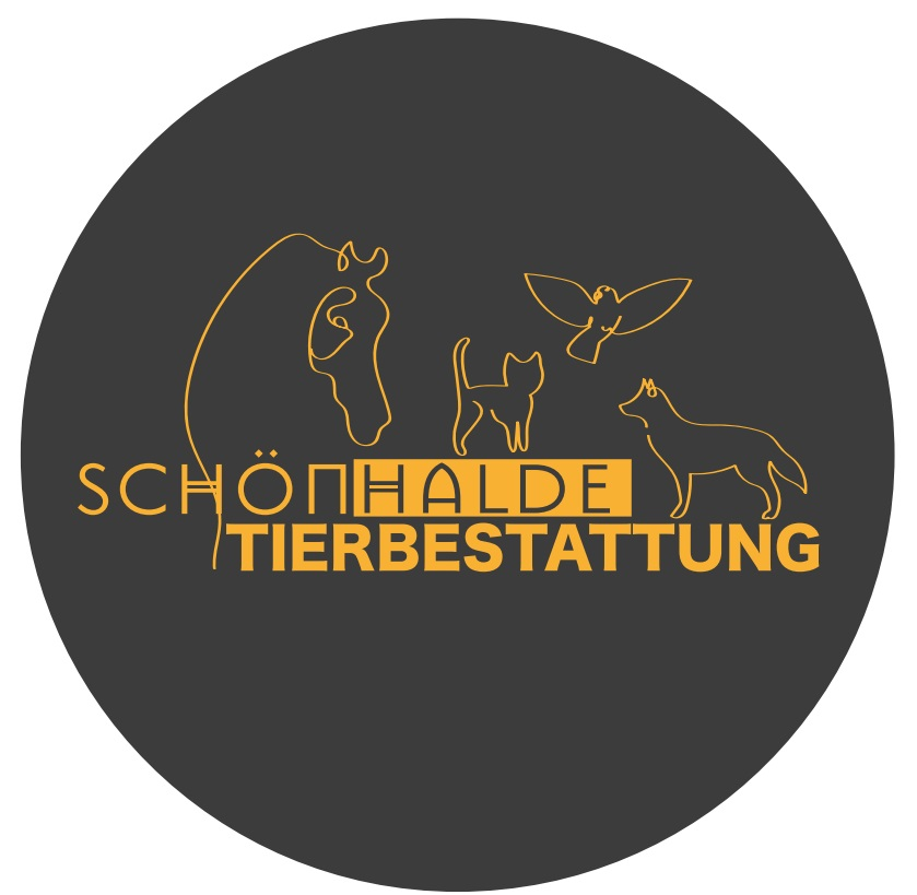 Karneval Der Tiere Unterrichtsmaterial Das Beste Von Lichterfelde Barnim Schorfheide